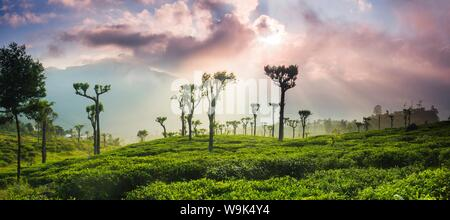 Sunrise over tea plantations and mountains, Haputale, Sri Lanka Hill Country, Central Highlands, Sri Lanka, Asia - Stock Photo