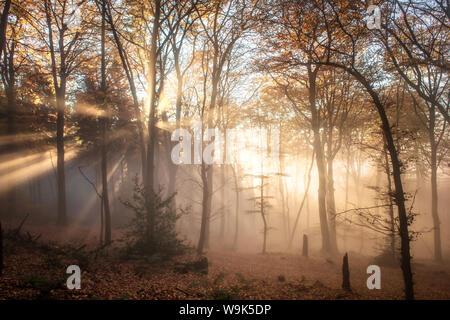 Pronounced sun rays in a misty forest scene, Heidelberg area, Baden-Wurttemberg, Germany, Europe - Stock Photo