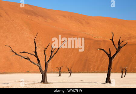 Dead camelthorn trees said to be centuries old against the towering orange sand dunes of the Namib Desert at Dead Vlei, Namib Desert, Namibia - Stock Photo