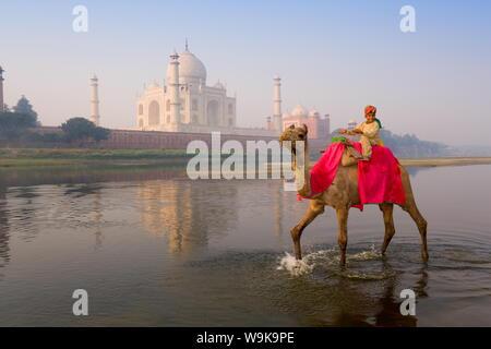 Boy riding camel in the Yamuna River in front of the Taj Mahal, UNESCO World Heritage Site, Agra, Uttar Pradesh, India, Asia - Stock Photo