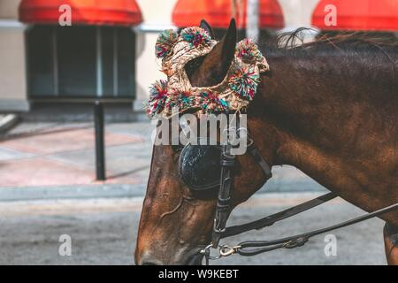 A closeup shot of a brown horse wearing an accessory and bridle - Stock Photo