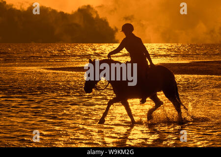Horsewoman / female horse rider on horseback riding through water on the beach with approaching thunderstorm, silhouetted at sunset in summer - Stock Photo