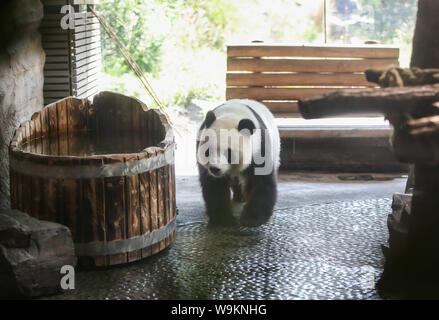 Berlin. 14th Aug, 2019. Photo taken on Aug. 14, 2019 shows panda Meng Meng at the Zoo Berlin in Berlin, capital of Germany. Zoo Berlin is getting ready to welcome one or two newborn panda cubs as experts say it's very likely that the 6-year-old panda Meng Meng is pregnant. Credit: Shan Yuqi/Xinhua/Alamy Live News - Stock Photo