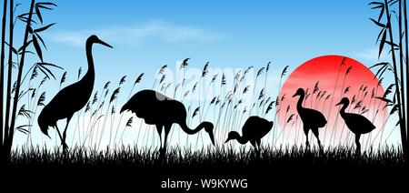 Birds cranes on sunrise background. Morning, sky, sun. Birds on a background of grass, bamboo and reeds. Evening landscape. Wildlife scene. - Stock Photo