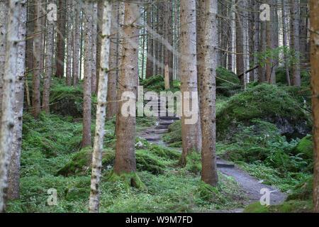 idyllischer Wald beim Piburger See - Stock Photo