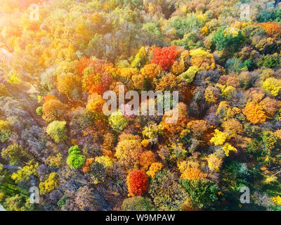 Autumn forest aerial view. Multicolored fall trees in city park. Beautiful colorful seasonal foliage. Autumnal vibrant riot of bright colors