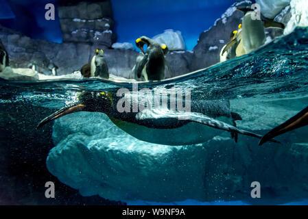 A family of penguins in the aquarium