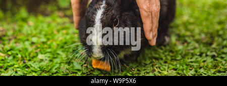 Hands protect rabbit. Cosmetics test on rabbit animal. Cruelty free and stop animal abuse concept BANNER, LONG FORMAT - Stock Photo