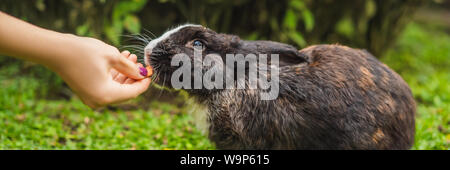 Hands feed the rabbit. Cosmetics test on rabbit animal. Cruelty free and stop animal abuse concept BANNER, LONG FORMAT - Stock Photo