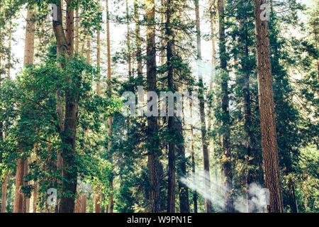 Fire smoke in sequoia redwood forest in Yosemite, California - Stock Photo
