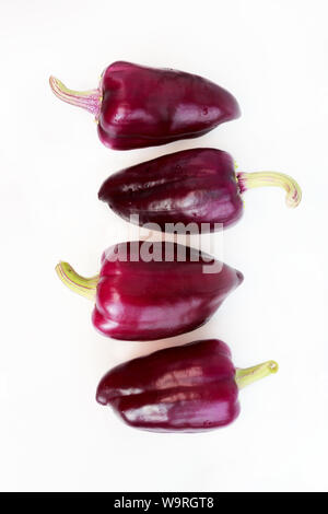 four violet peppers on a white background. vertical. - Stock Photo