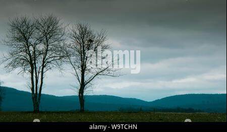 Leafless trees - Stock Photo