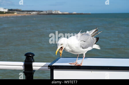 Brighton, UK. 15th August 2019.  - A Herring Gull enjoys a snack on Brighton Palace Pier on a bright sunny but windy day on the south coast but heavy rain is forecast for most of Britain over the next couple of days Credit: Simon Dack / Alamy Live News - Stock Photo
