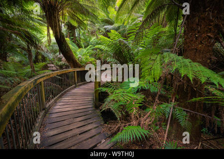 Walkway through Great Otway National Park, Victoria, Australia - Stock Photo