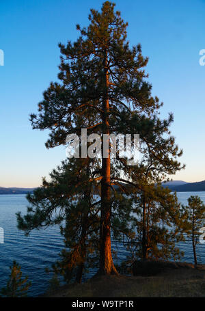 The late afternoon sun shining on a lakeside tree. - Stock Photo
