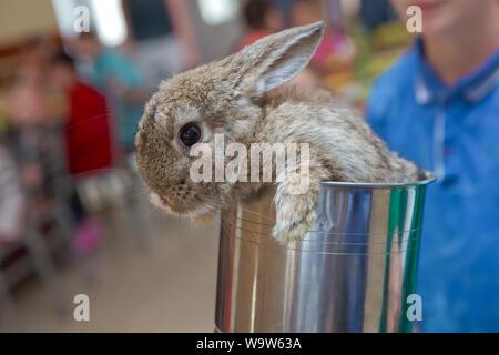 Baby adorable rabbit . Lovely pet with fluffy hair. Easter has rabbit as symbol celebration. Three baby bunny rabbits in pastel silver metal pots . Ea - Stock Photo