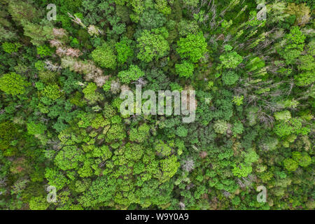 Aerial top view forest, Texture of forest view from above, drone view - Stock Photo