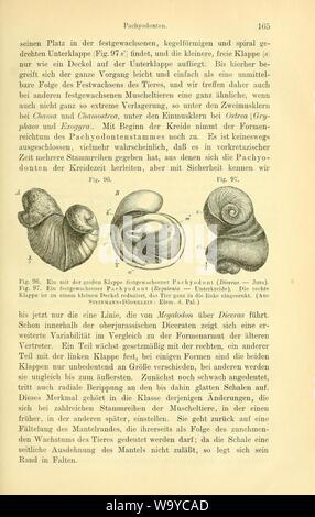 Die geologischen grundlagen der abstammungslehre (Page 165) - Stock Photo