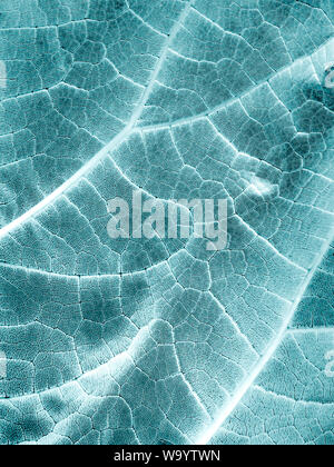 Biomimicry - Biomimetics - Hybrid Nature - Abstract Illustration - Stock Photo