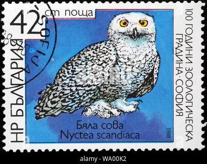 Snowy Owl, Bubo scandiacus, Strix scandiaca, Nyctea scandiaca, postage stamp, Bulgaria, 1988 - Stock Photo