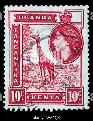 Giraffe, Giraffa camelopardalis, postage stamp, British East Africa, Kenya, Uganda, Tanganyika, 1954 - Stock Photo