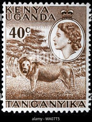 Lion, Panthera leo, postage stamp, British East Africa, Kenya, Uganda, Tanganyika, 1958 - Stock Photo