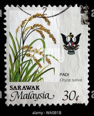 Oryza sativa, Asian rice, postage stamp, Sarawak, Malaysia, 1986 - Stock Photo