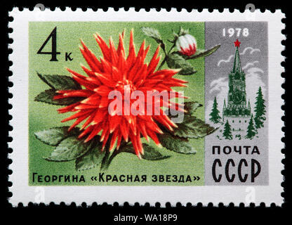 Dahlia 'Red Star', postage stamp, Russia, USSR, 1978 - Stock Photo