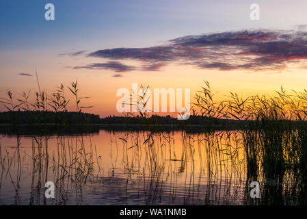 Reeds plants on the shores of the calm Saimaa lake in Finland under a nordic sky on fire  - 3 - Stock Photo