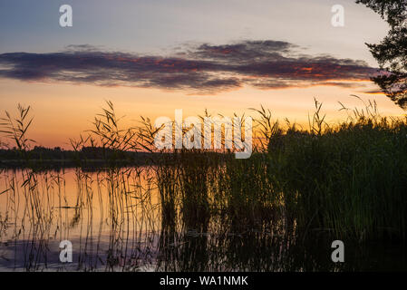 Reeds plants on the shores of the calm Saimaa lake in Finland under a nordic sky on fire  - 2 - Stock Photo