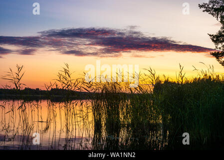 Reeds plants on the shores of the calm Saimaa lake in Finland under a nordic sky on fire  - 4 - Stock Photo