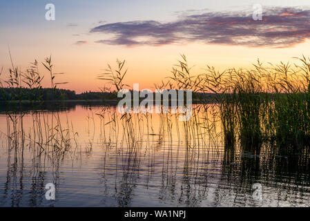 Reeds plants on the shores of the calm Saimaa lake in Finland under a nordic sky on fire  - 1 - Stock Photo