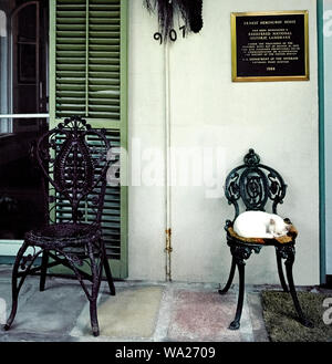 This sleepy cat resting outdoors on an old wrought-iron chair is one of dozens of felines roaming the residence of famed author Ernest Hemingway who lived from 1931-39 at 907 Whitehead Street in Key West in the Florida Keys, Florida, USA. Many of these descendants of Hemingway's furry pets are polydactyl cats that have six toes instead of the usual five toes on their front paws and four toes on the back paws. These unusual animals can be seen by visitors at the privately-owned Hemingway House, which was built in 1851 and now is a U.S. National Historic Landmark open daily for tours. - Stock Photo