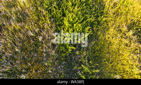 Natural aerial abstract surface background top view of uncultivated meadow with colorful flowers, foliage plants and shrubs - Stock Photo
