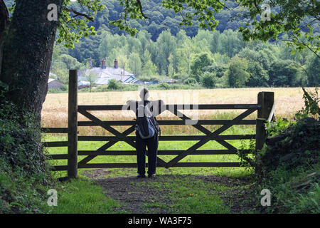 Looking over a fence to a field of grain at Morewellham on the banks of the River Tamar in Devon - Stock Photo