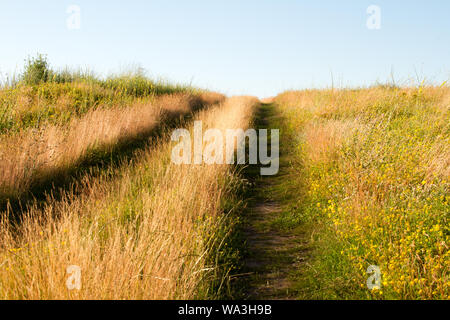 Close up two-track dirt road in a flowering grassy meadow against a blue sky, selective focus - Stock Photo