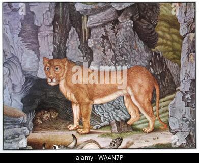 Die Löwin. - Stock Photo