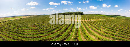 Aerial view of apple orchard with beautiful blue sky on background, panoramic landscape. Themes of agro-industrial business and gardening - Stock Photo