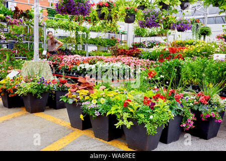 Colorful flowers and a female florist salesperson at Atwater flower market in Montreal, Quebec, Canada. - Stock Photo