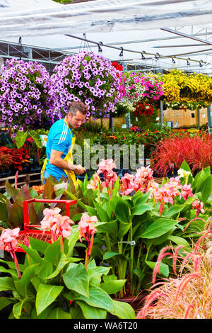 Florist truncates and arranges flowers and plants at Atwater flower market in Montreal, Quebec, Canada. - Stock Photo