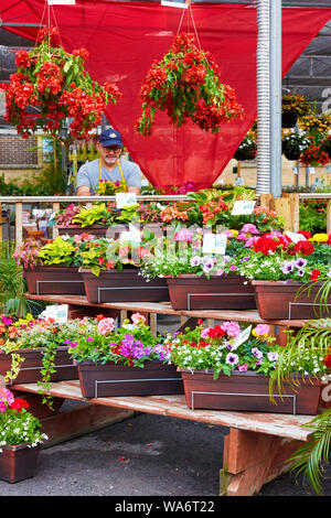 Colorful flowers and a florist salesperson at Atwater flower market in Montreal, Quebec, Canada. - Stock Photo
