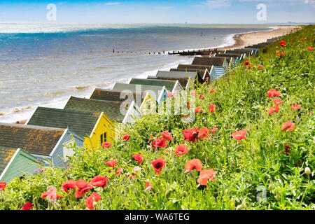 Red poppies amongst the grasses on the cliff at Southwold, Suffolk, with beach huts below. - Stock Photo