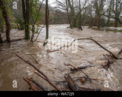 Spring Flooding and Fast Moving Melt Water During Heavy Rain. The Water Level Is Dangerously High And The River Has Burst It's Banks. Trees are becomi - Stock Photo
