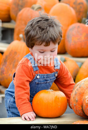 a cute little toddler in overalls tries to decide on a perfect pumpkin at a farm, to be his Halloween jack o lantern - Stock Photo