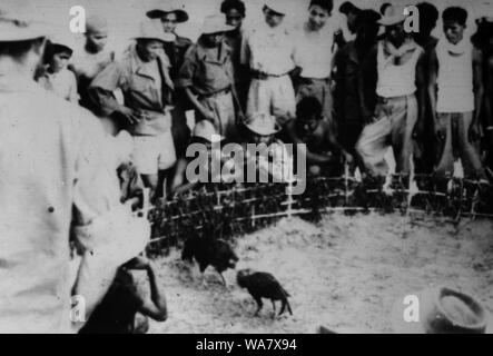 AJAXNETPHOTO. 1953-1957 (APPROX). INDO CHINA. VIETNAM. (IN-COUNTRY LOCATION UNKNOWN.) - GROUP WATCHING COCKFIGHTING.  PHOTO:JEAN CORRE/AJAXREFRX7_191508_230 - Stock Photo