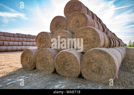 huge straw pile of Hay roll bales on among harvested field. cattle bedding - Stock Photo
