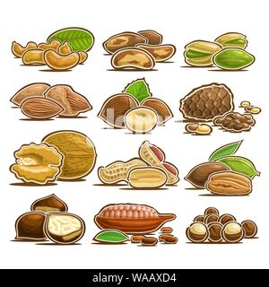Vector set of Nuts, 12 cut out assorted heap of abstract hazel fruits for healthy nutrition, collection of isolated various piles of nut kernels in nu - Stock Photo