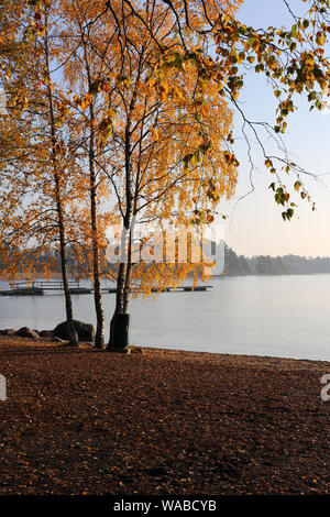Trees with yellow autumn / fall leaves by the Baltic Sea during a stunning sunset / sunrise in Espoo, Finland. Amazing, scenic landscape image. - Stock Photo