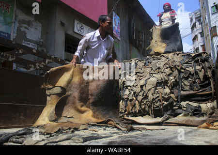Dhaka, Bangladesh. 19th Aug, 2019. Workers load rawhide of the sacrificial animals on a truck at the Posta area in Dhaka.In the post-Eid few days, it has been a common scenario that traders at Posta area, which is known as wholesale market for rawhide, are busy processing rawhide by rubbing salt. Not only the rawhide traders but tanners are also busy buying rawhide from the wholesalers during Eid-ul-Azha. Credit: Sultan Mahmud Mukut/SOPA Images/ZUMA Wire/Alamy Live News - Stock Photo