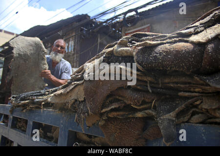 Dhaka, Bangladesh. 19th Aug, 2019. A Worker loads rawhide of the sacrificial animals on a truck at the Posta area in Dhaka.In the post-Eid few days, it has been a common scenario that traders at Posta area, which is known as wholesale market for rawhide, are busy processing rawhide by rubbing salt. Not only the rawhide traders but tanners are also busy buying rawhide from the wholesalers during Eid-ul-Azha. Credit: Sultan Mahmud Mukut/SOPA Images/ZUMA Wire/Alamy Live News - Stock Photo
